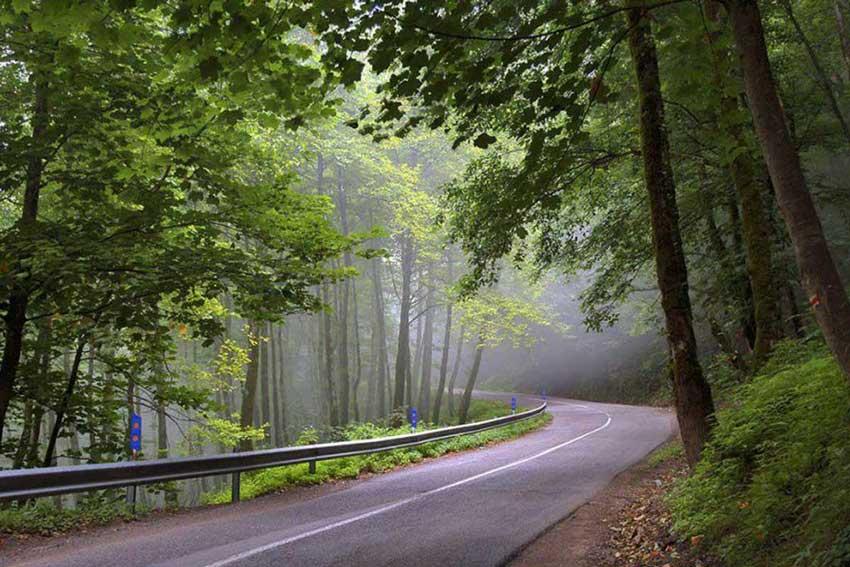 جنگل رامسر دیدنی های رامسر