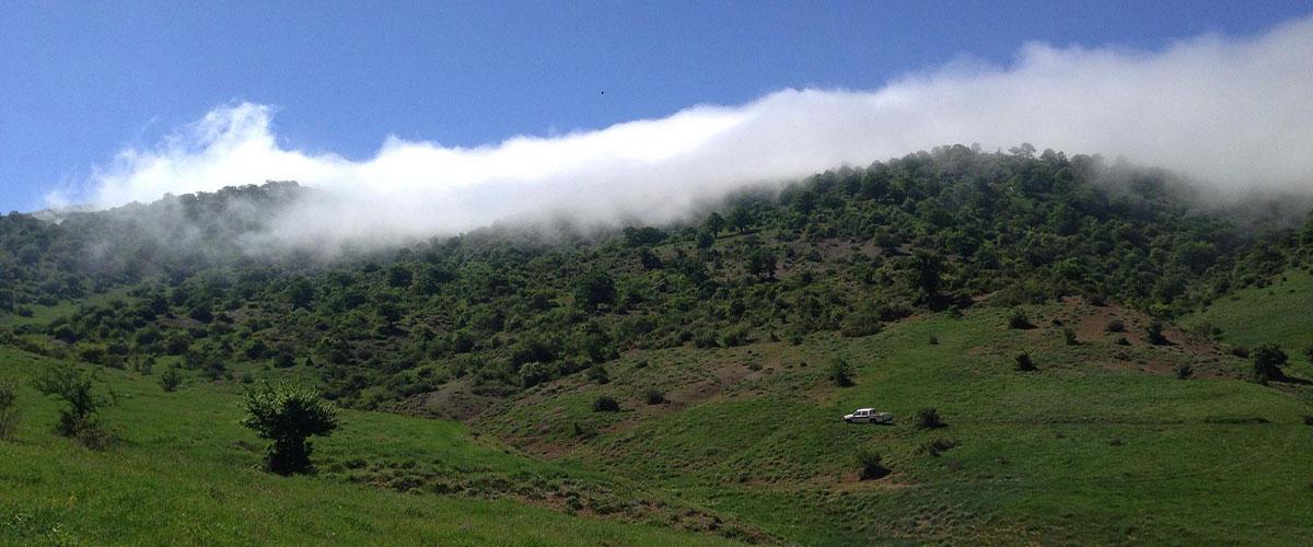 عکس جنگل ابر