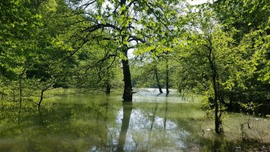 Photo of دریاچه چورت ؛ جلوه سبز چشمنواز مخفی در شهر ساری + عکس