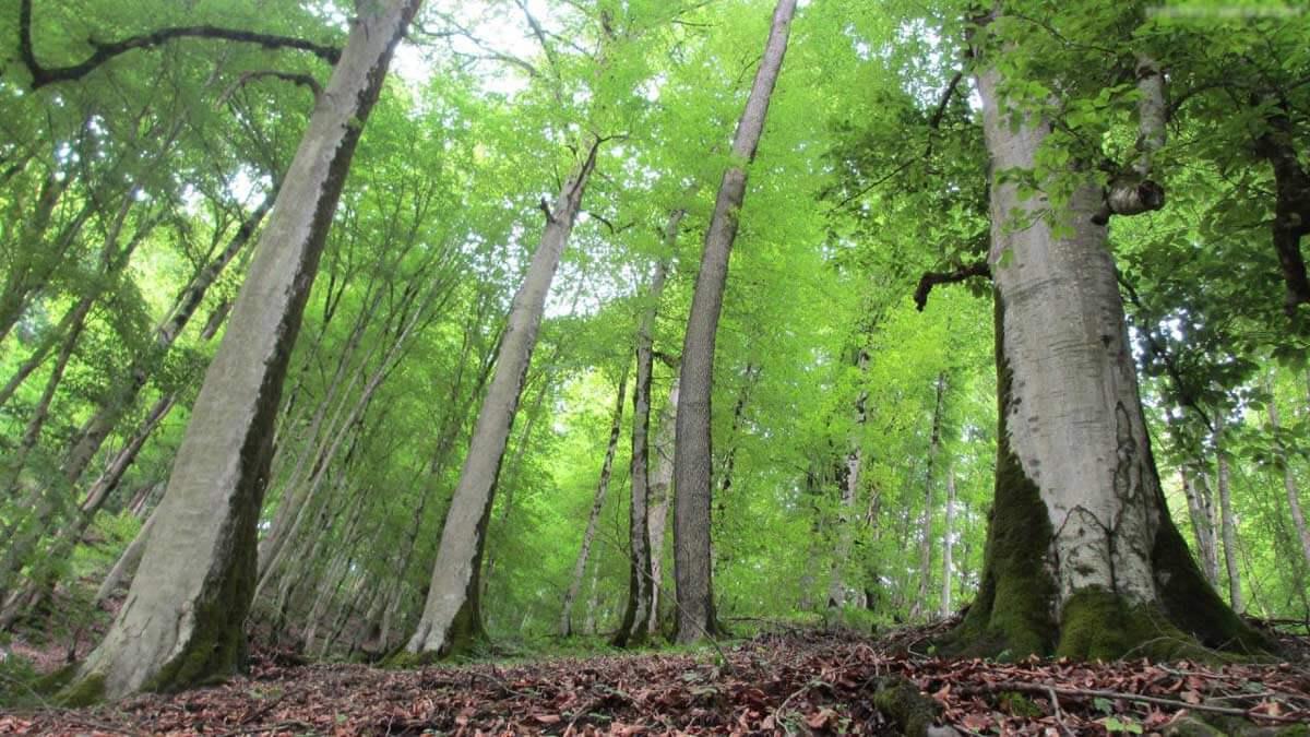 جنگلهای دو هزار و سه هزار