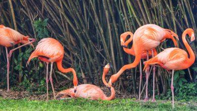 Photo of دنیای زیبا و جذاب پرندگان استوایی در باغ پرندگان کیش