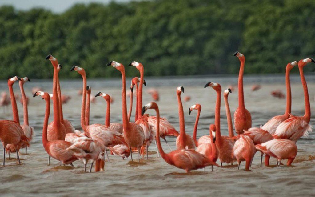 پرندههای مهاجر