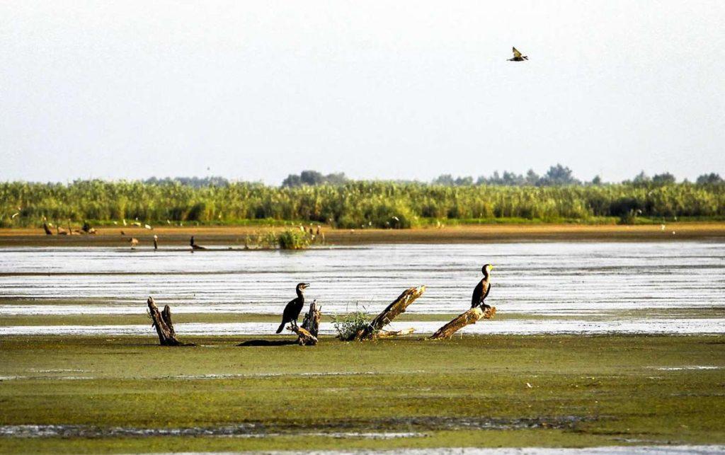 میزبانی پرندههای مهاجر