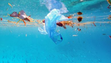 Photo of بدون استفاده از پلاستیک سفر کنید!