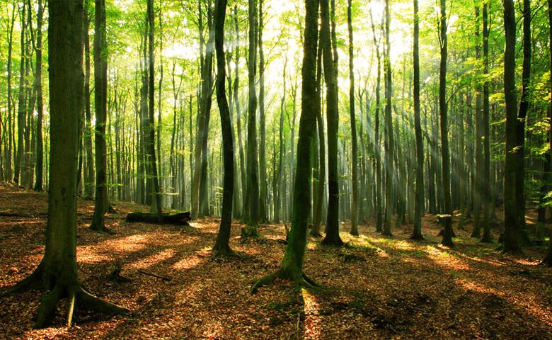 بهترین جنگل های شمال کجاست